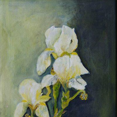 2014 - Weiße Iris, 50x60cm, Acryl