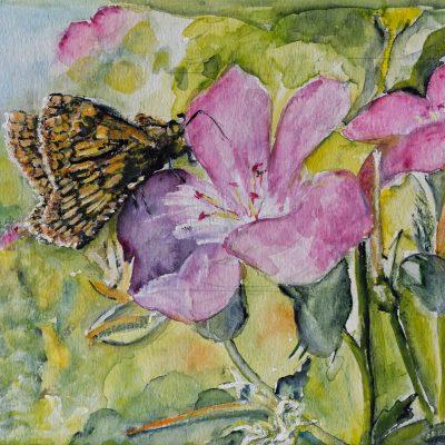 2011 - Schmetterling auf Wicke, 50x40cm, Aquarell