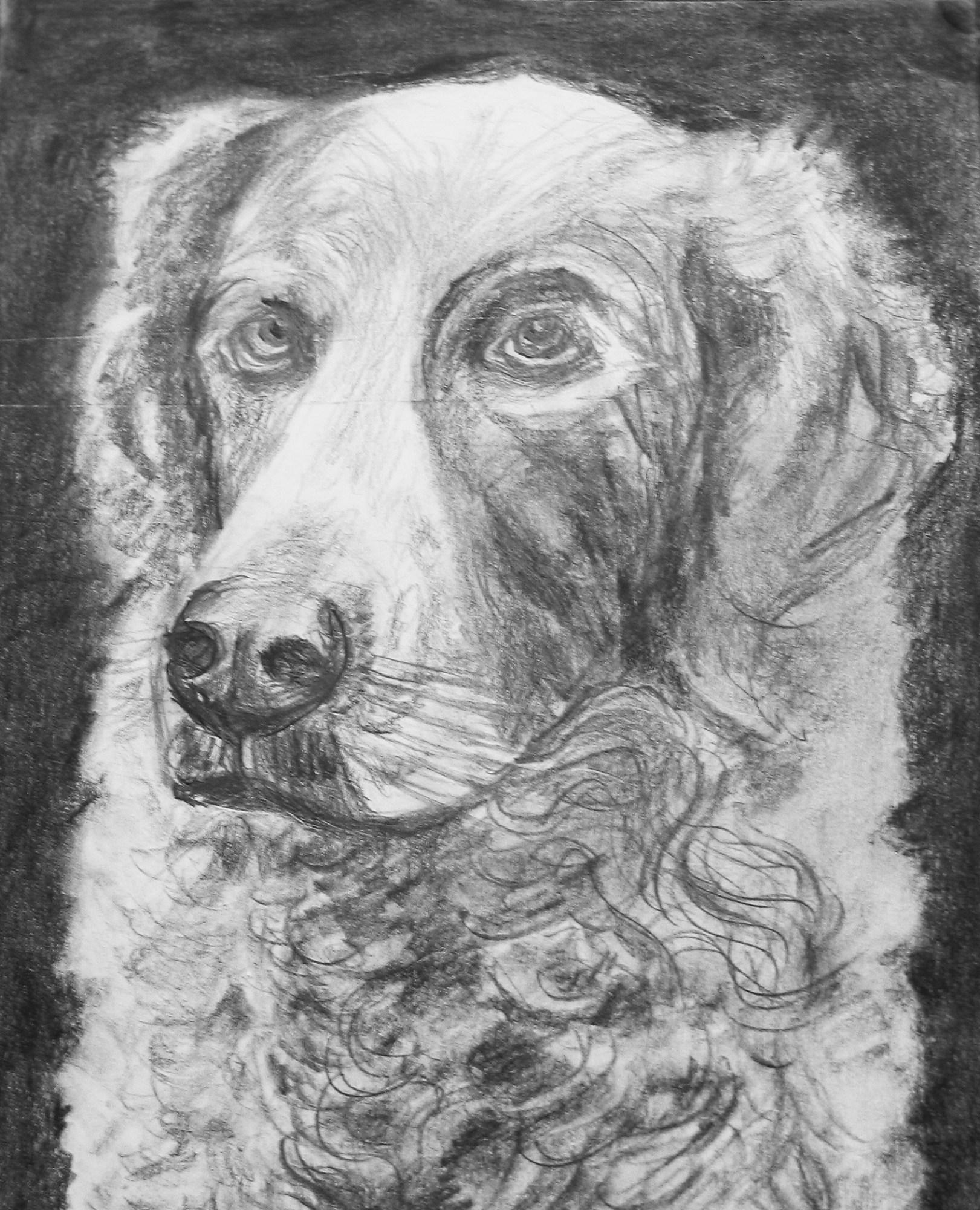 2004 - Hund, 40x50cm, Bleistift