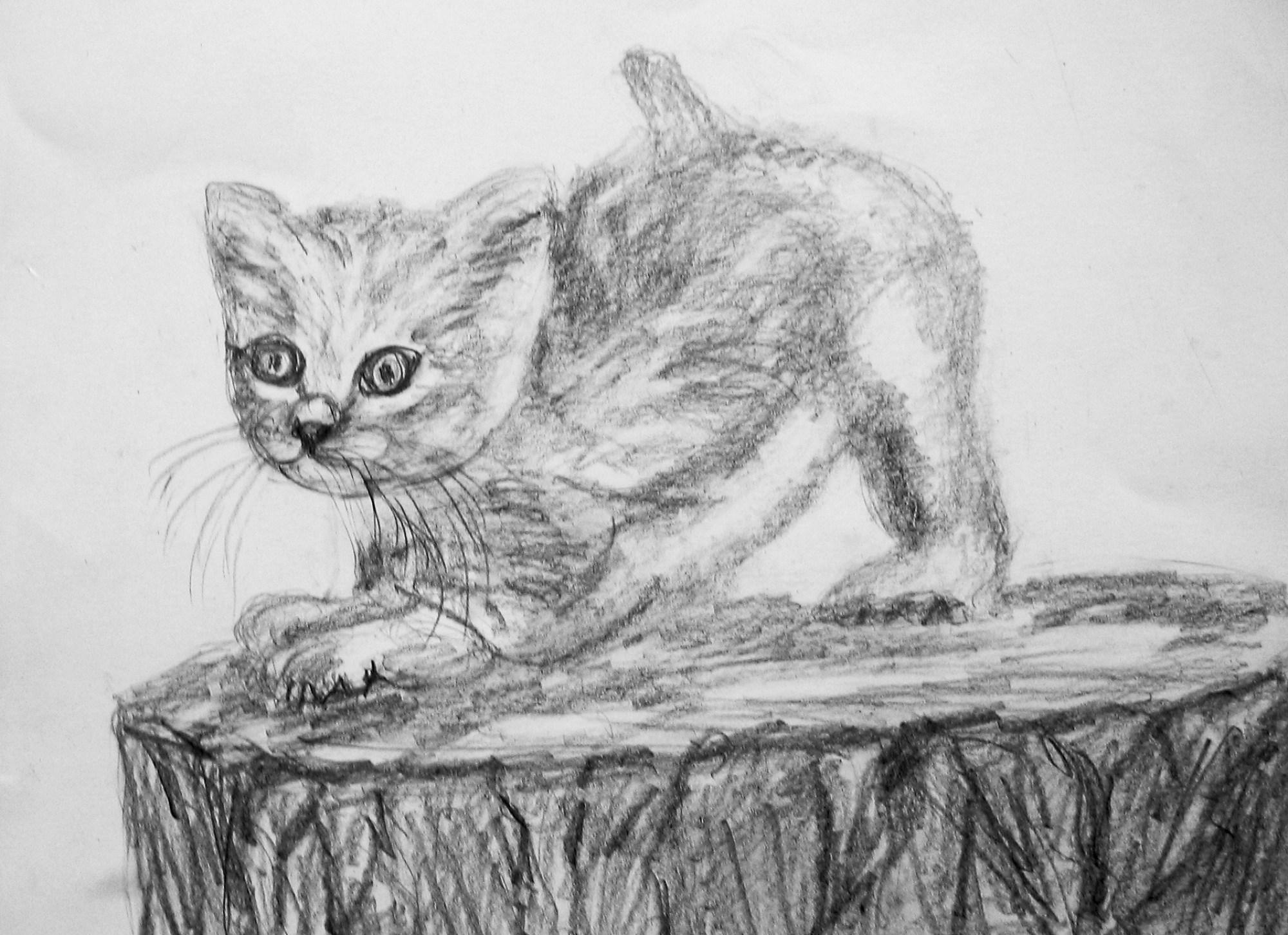 2009 - Junge Katze II, 50x40cm, Bleistift