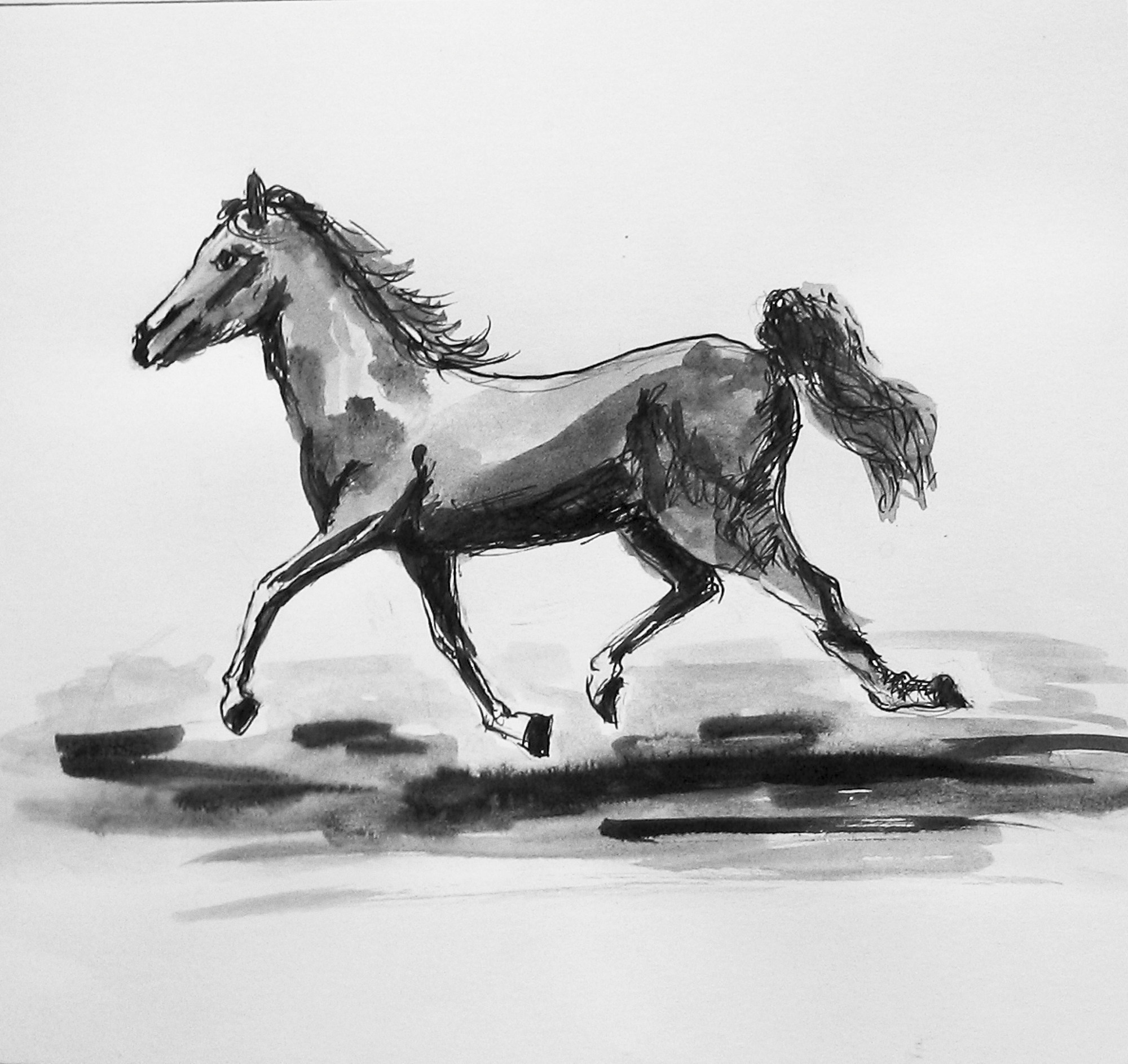 2009 - Pferd in Bewegung, 50x40cm, Tusche